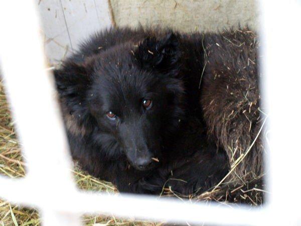 В Харькове  центр для бездомных собак  «проглотит» 14,5 миллиона гривен (ФОТО), фото-5