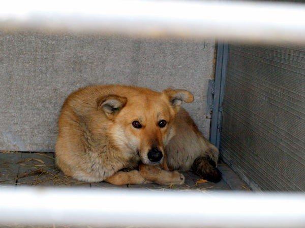 В Харькове  центр для бездомных собак  «проглотит» 14,5 миллиона гривен (ФОТО), фото-6