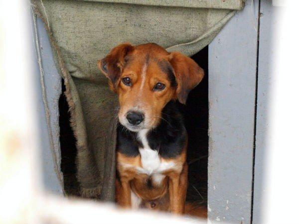 В Харькове  центр для бездомных собак  «проглотит» 14,5 миллиона гривен (ФОТО), фото-8