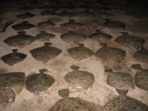 Камбалу от крымских пограничников браконьеры прятали в мешках (фото), фото-2