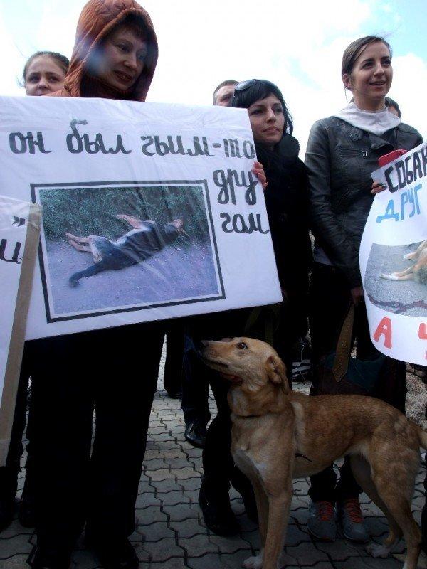 В Донецке протестовали против массовых убийств животных (фото), фото-5