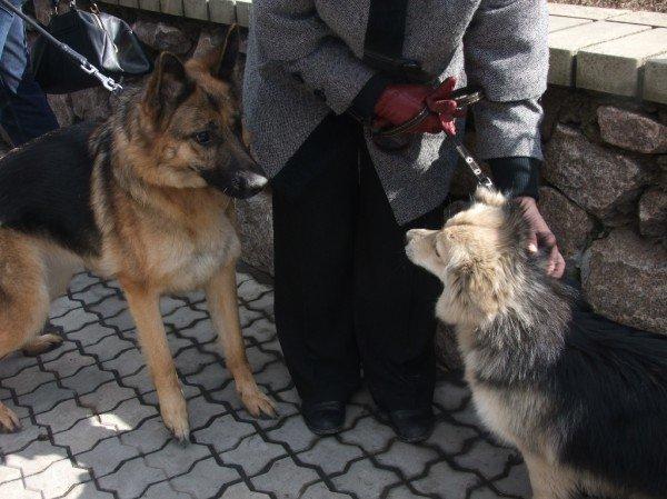 В Донецке протестовали против массовых убийств животных (фото), фото-6
