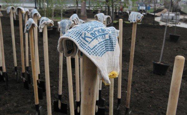 Как в Донецке губернатор, мэр и председатель облсовета садили деревья (фото), фото-2