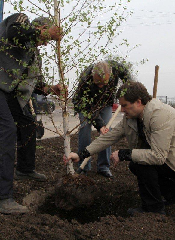 Как в Донецке губернатор, мэр и председатель облсовета садили деревья (фото), фото-4