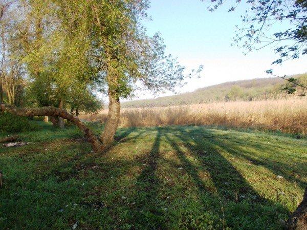 Маёвка на Северном ставке в Артемовске: о белках, утках и мусоре, фото-1