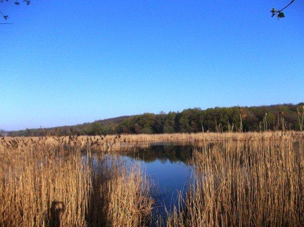 Маёвка на Северном ставке в Артемовске: о белках, утках и мусоре, фото-2