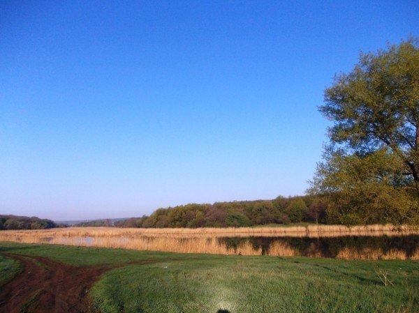 Маёвка на Северном ставке в Артемовске: о белках, утках и мусоре, фото-10