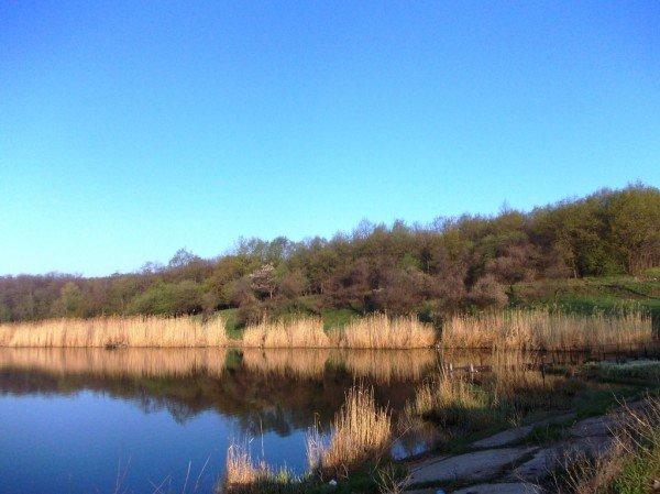Маёвка на Северном ставке в Артемовске: о белках, утках и мусоре, фото-4