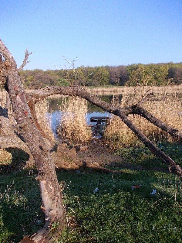 Маёвка на Северном ставке в Артемовске: о белках, утках и мусоре, фото-6