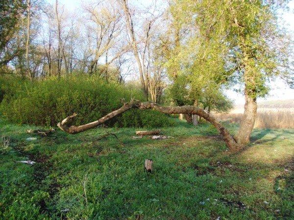 Маёвка на Северном ставке в Артемовске: о белках, утках и мусоре, фото-7
