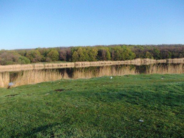 Маёвка на Северном ставке в Артемовске: о белках, утках и мусоре, фото-8