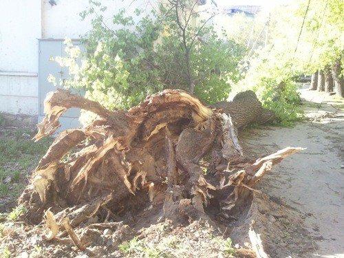 В Липецке ветром валило деревья, фото-1