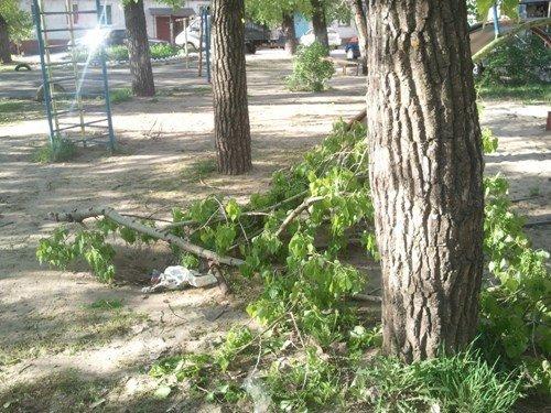 В Липецке ветром валило деревья, фото-2