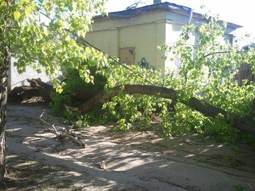 В Липецке ветром валило деревья, фото-3