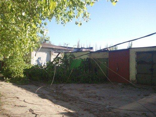 В Липецке ветром валило деревья, фото-4