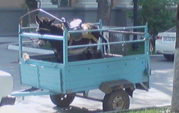 Симферопольскую улицу за 14 миллионов поливают ослиной мочой (ФОТО), фото-2