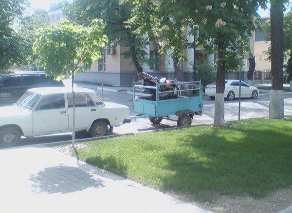 Симферопольскую улицу за 14 миллионов поливают ослиной мочой (ФОТО), фото-1