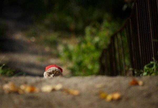 Коли ви хочете, щоб життя посміхалося вам, подаруйте йому спочатку свій хороший настрій. Доброго ранку!, фото-1
