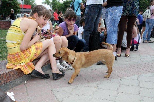 В Симферополе молодежь повязывает «георгиевские ленты» куда придется (ФОТО), фото-6