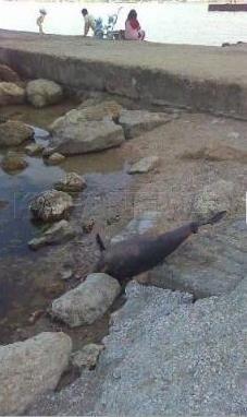 В Крыму мертвых дельфинов выносит на берег (фото), фото-3