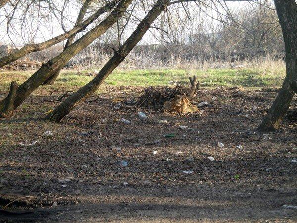 Жители 5-го квартала жалуются на мусор во дворах, забитые канализации и своры бездомных собак, фото-6