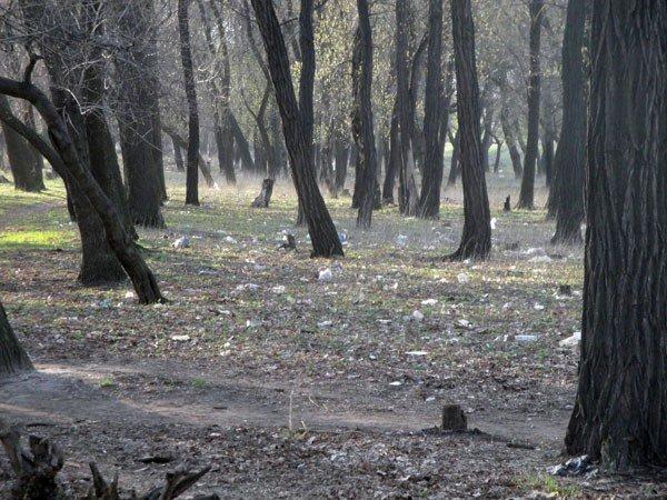 Жители 5-го квартала жалуются на мусор во дворах, забитые канализации и своры бездомных собак, фото-7