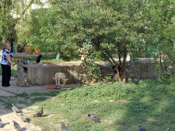 Жители 5-го квартала жалуются на мусор во дворах, забитые канализации и своры бездомных собак, фото-4