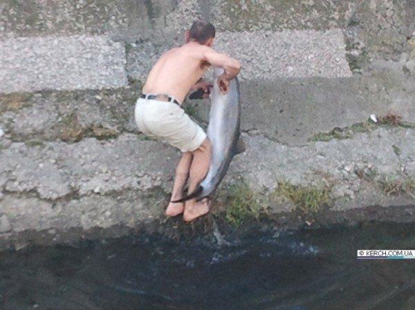 Крымчане возят дельфинов на такси, спасая их от смерти, фото-3