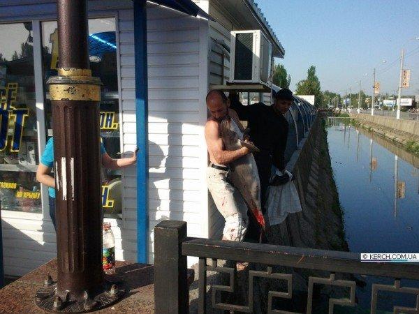Крымчане возят дельфинов на такси, спасая их от смерти, фото-6