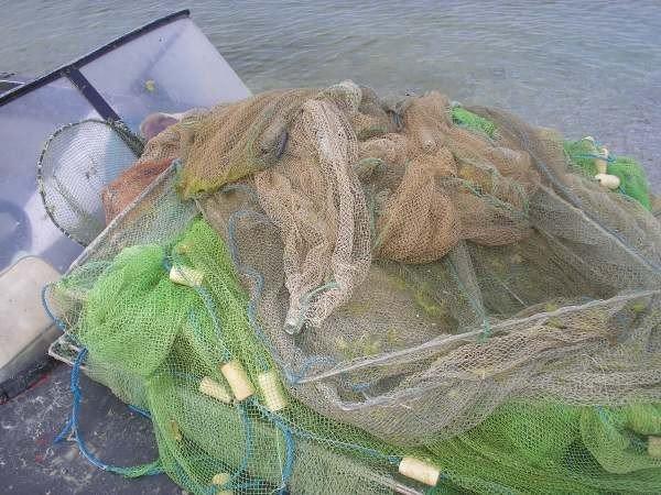 В Крыму браконьеры наловили креветок и крабов на почти 300 тыс. грн. (фото), фото-1