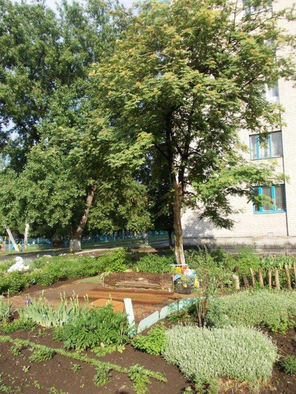 Сайт 06274 ищет самые красивые дворы Артемовска, фото-3