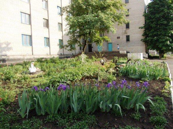 Сайт 06274 ищет самые красивые дворы Артемовска, фото-5