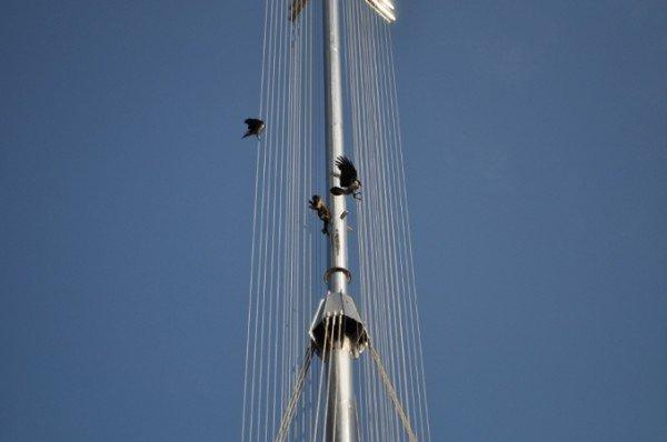 В Крыму снимали с памятника свободолюбивую обезьяну (фото), фото-1