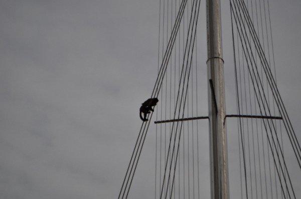В Крыму снимали с памятника свободолюбивую обезьяну (фото), фото-2