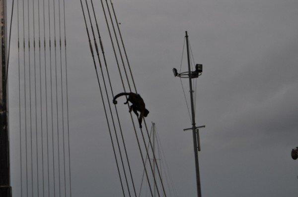В Крыму снимали с памятника свободолюбивую обезьяну (фото), фото-4