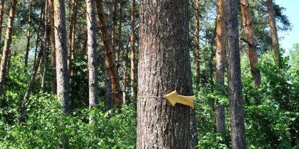 В донецком лесу проложили экологическую тропу (фото), фото-2