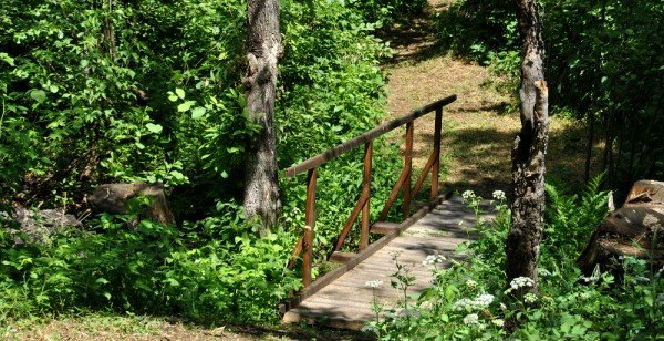 В донецком лесу проложили экологическую тропу (фото), фото-3