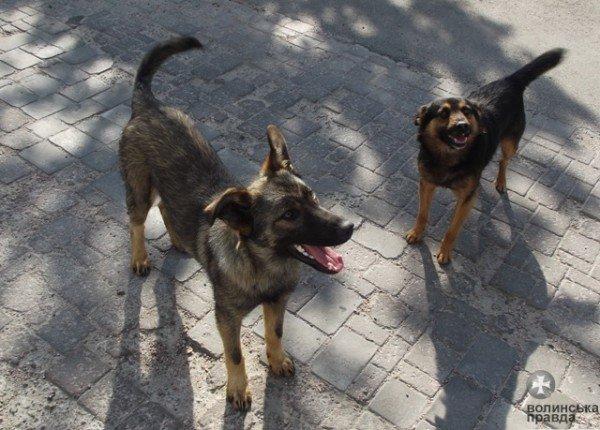 Під «Білим домом» у Луцьку будівельники зведуть буду для собак «дворянської» породи (ФОТО), фото-1