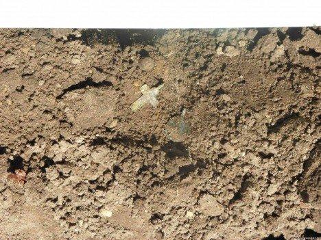 Шукали сліди трипільців ‒ знайшли цвинтар (ФОТО), фото-6