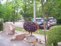 Увага! У Тернополі з'явилися дивні тварини (фото), фото-3