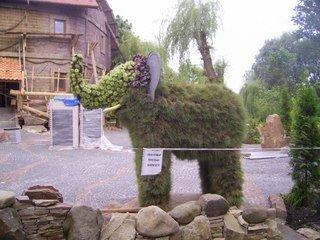 Увага! У Тернополі з'явилися дивні тварини (фото), фото-1