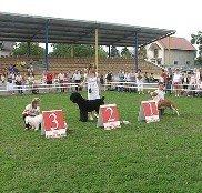 Під Тернополем у міжнародному конкурсі змагались представники чотирьох країн (фото), фото-1