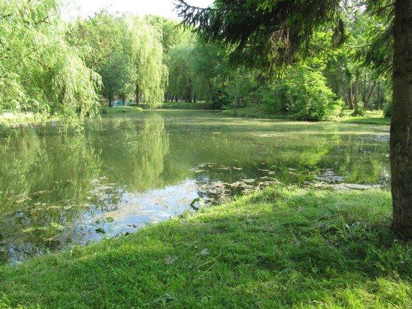 У тернопільському гідропарку один із ставків нагадує відстійник (фото), фото-1
