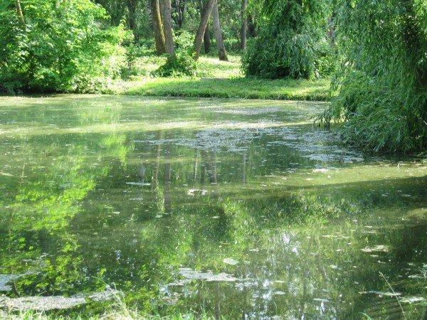 У тернопільському гідропарку один із ставків нагадує відстійник (фото), фото-2