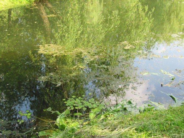 У тернопільському гідропарку один із ставків нагадує відстійник (фото), фото-5