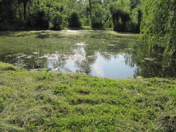 У тернопільському гідропарку один із ставків нагадує відстійник (фото), фото-6