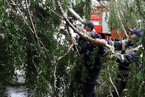 На Тернопільщині рятувальники звільняли трасу від повалених дерев (ВІДЕО, ФОТО), фото-3