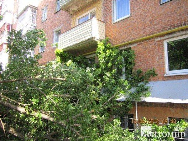 Дерево, що впало на будинок, житомиряни змушені прибирати самостійно (ФОТО), фото-2