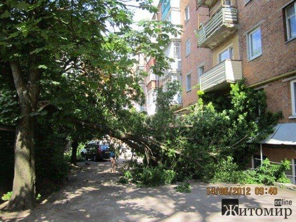 Дерево, що впало на будинок, житомиряни змушені прибирати самостійно (ФОТО), фото-3