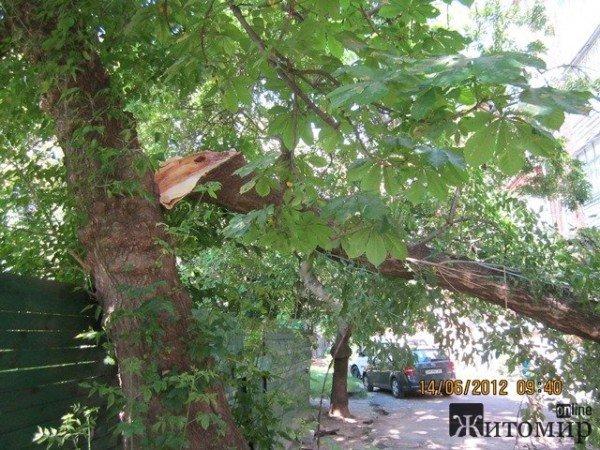 Дерево, що впало на будинок, житомиряни змушені прибирати самостійно (ФОТО), фото-4